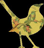 vogel-groot-2
